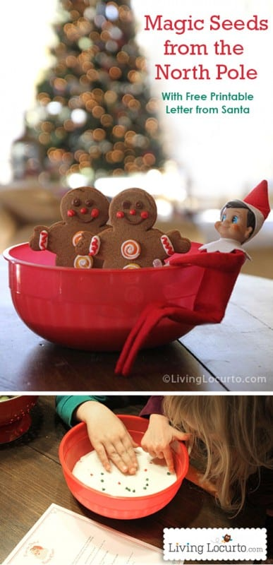 Elf on the Shelf Magic Seeds Idea and Free Printable Letter from Santa! LivingLocurto.com