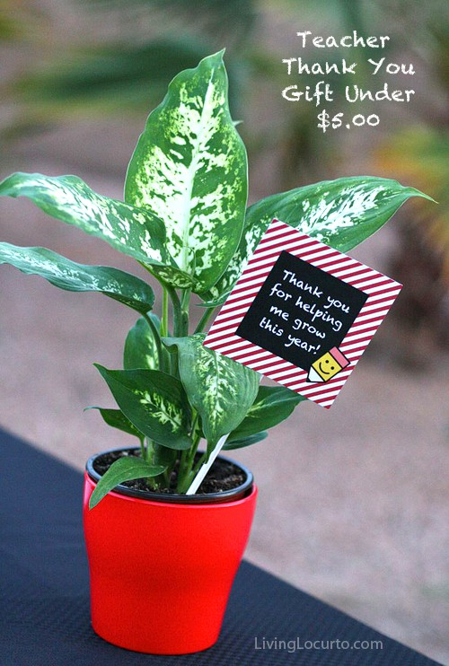Easy Teacher Appreciation Gifts! Thank you for helping me grow this year Free Printable Tags for a flower or plant. Teacher Appreciation Free Printables. LivingLocurto.com