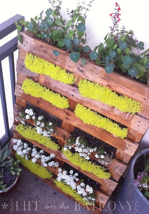 12 ideas for turning a pallet into a flower garden sisterspd