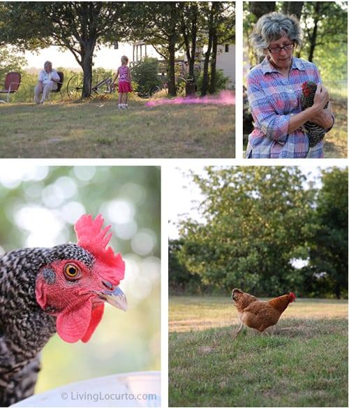 Chickens | Oklahoma | Living Locurto
