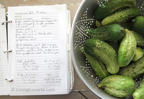 Old Fashioned Refrigerator Dill Pickles Family Recipe by Amy Locurto at  LivingLocurto.com