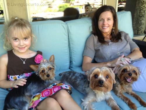 Cute dogs | Living Locurto | Mini Yorkshire Terrier