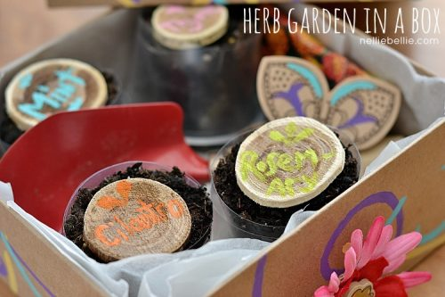Herb Garden in a Box by Nellie Bellie