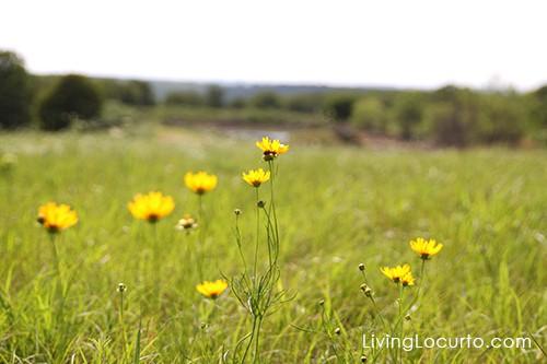 Pawhuska Oklahoma - Field of Flowers