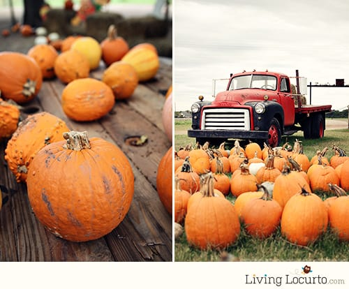 Pumpkin Patch - LivingLocurto.com