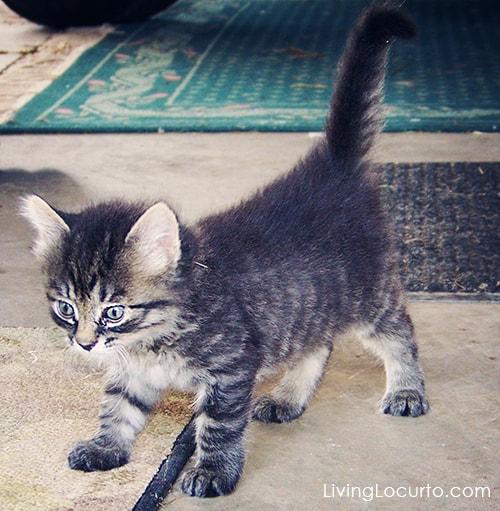 Cute Kitten & AvoDerm Pet Photo Contest
