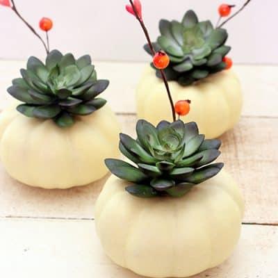 Mini Pumpkin Succulent Centerpiece Craft