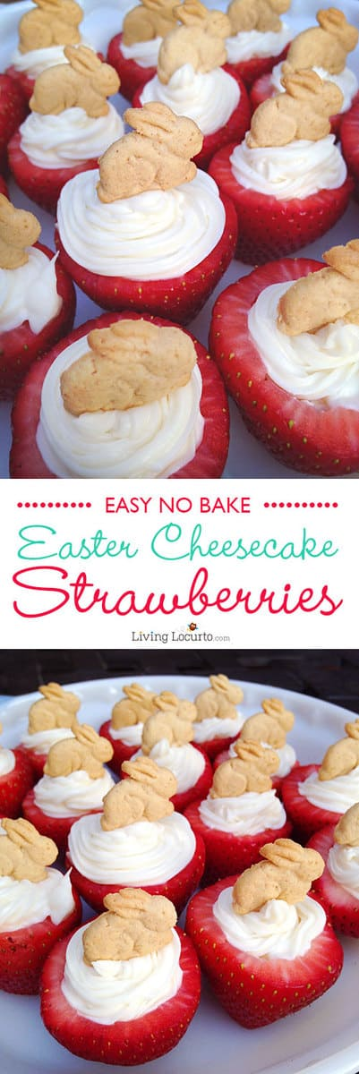 Easy No Bake Easter Bunny Cheesecake Stuffed Strawberries. This is a perfect party dessert recipe for spring, Easter or a farm themed birthday party. LivingLocurto.com