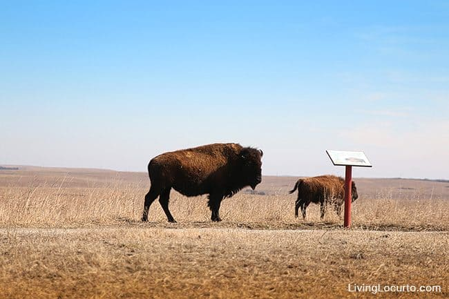Top 3 Favorite Things to do in Oklahoma. Travel Tips - Tallgrass Prairie Preserve Pawhuska