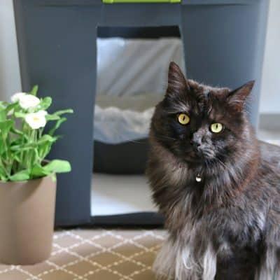 DIY Cat Litter Box Holder