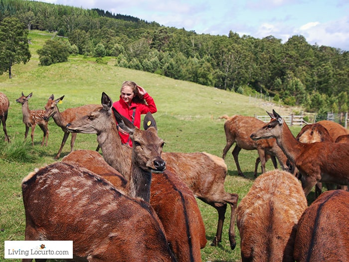 Ranger tour of the deer farm. 5 Best Outdoor Scotland Family Vacation Ideas! Amazing nature trips in Scotland for families. Kid friendly Scottish highlands vacation ideas and travel tips.
