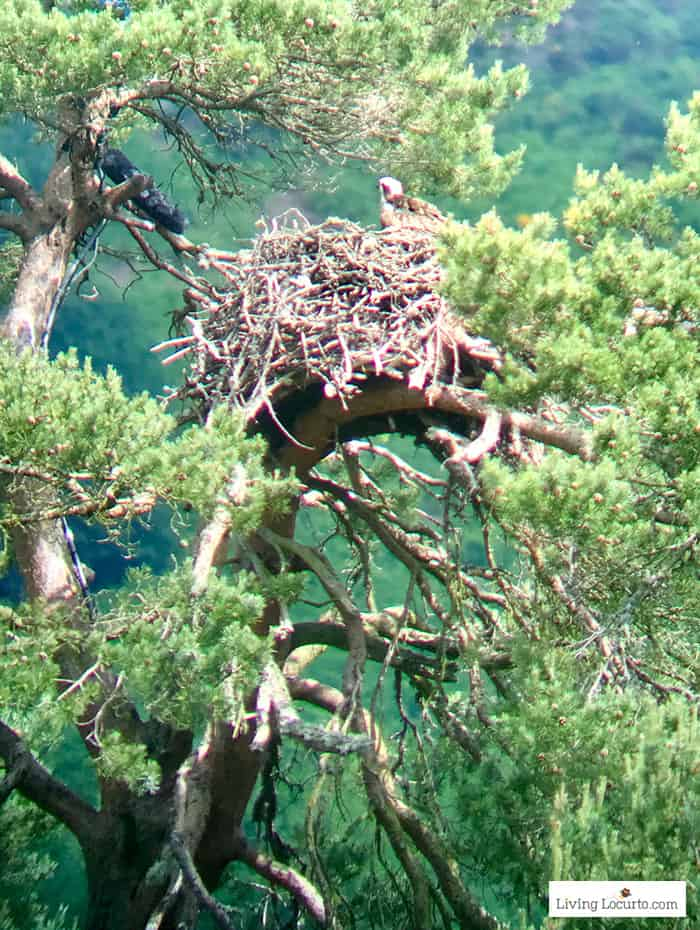 Watch an Osprey nest at the Scottish Wildlife Trust Loch of the Lowes. 5 Best Outdoor Scotland Family Vacation Ideas! Amazing nature trips in Scotland for families. Kid friendly Scottish highlands vacation ideas and travel tips.