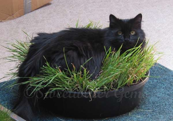 10 Amazing Ways to Spoil Your Cat! Cat Toys Cat grass box indoor garden pet home decor