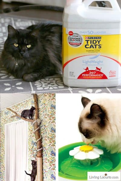 10 Amazing Ideas to Spoil Your Cat