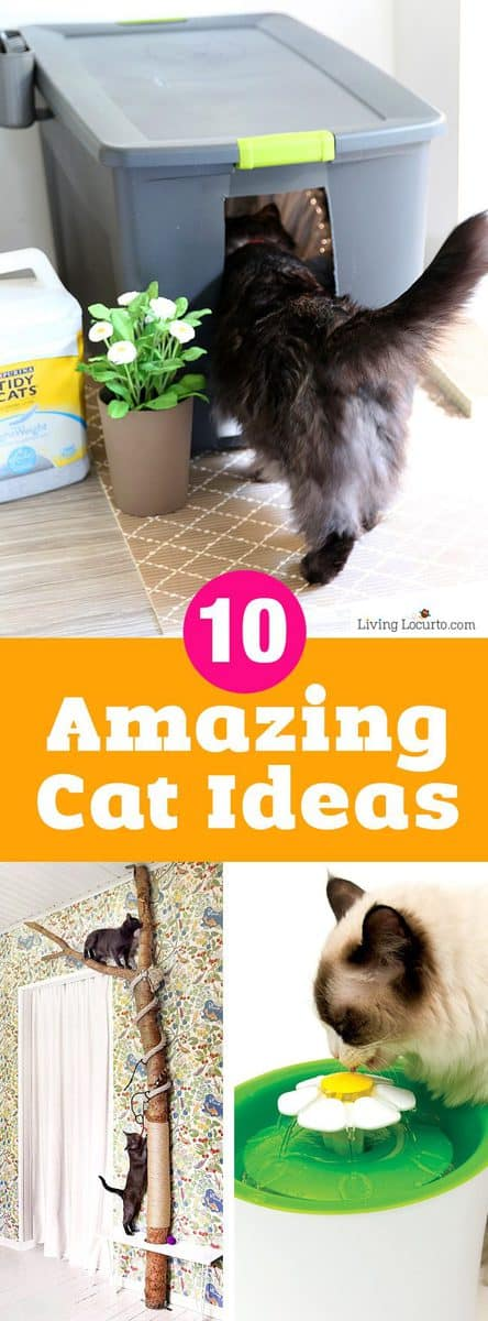 10 Amazing Ways to Spoil Your Cat! Fun DIY cat toys, kitty litter ideas and other amazing ideas to spoil your cat! Meow is the time to spruce up your home with cat crafts and pet products.