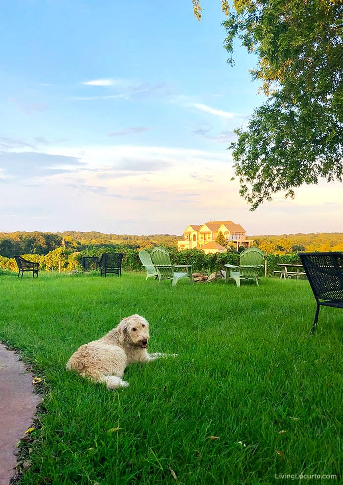A recap of the Living Locurto Retreat in Texas. A behind the scenes look at the DIY Lifestyle, Food and Party blog. Texas Winery