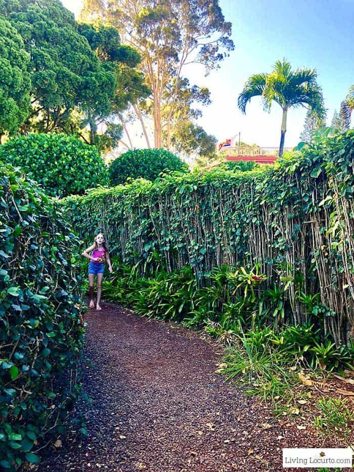 Dole Pineapple Plantation Maze - 2 Day Oahu Itinerary - Honolulu Hawaii Travel Tips - Living Locurto